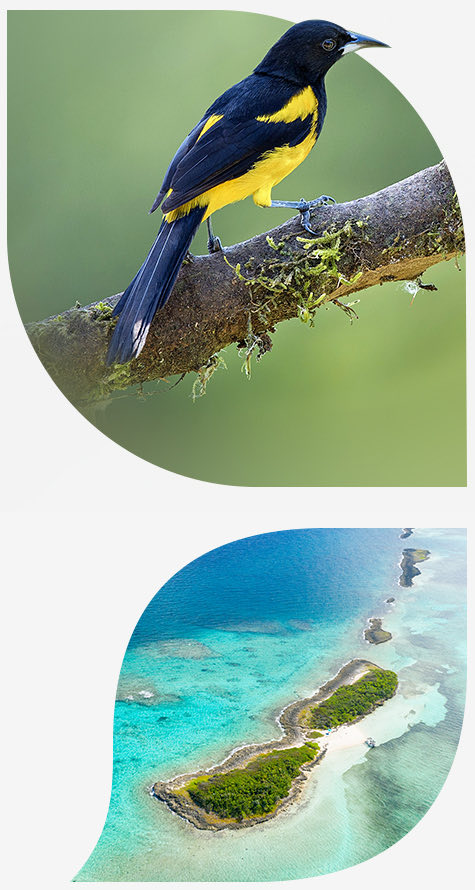 Black and yellow bird standing on branch and aerial view of an island