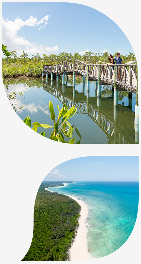 Top image couple on board walk over water bottom image beach with trees