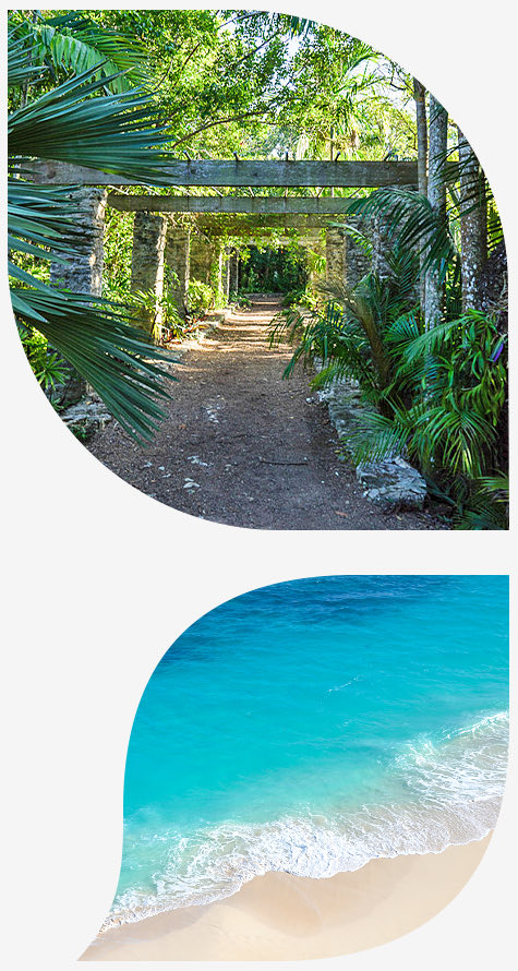 Top image trees and walkway bottom image beach with waves