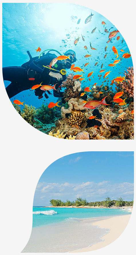 snorkeler near colorful coral reefs in the top image and view of the beach in bottom image