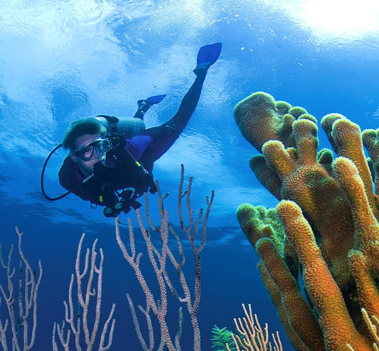 Man Diving underwater around coral reef