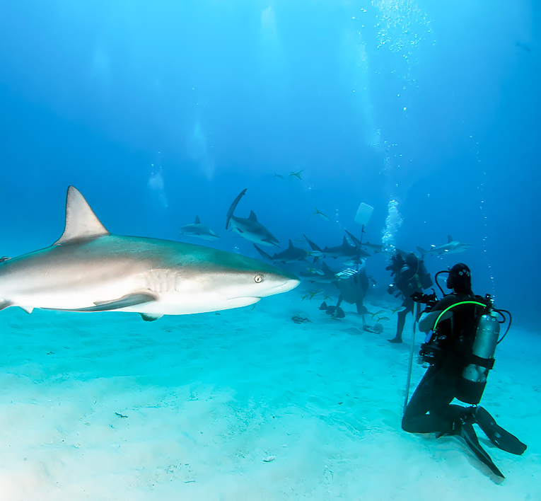 bmot bimini mainsite swim up to a shark