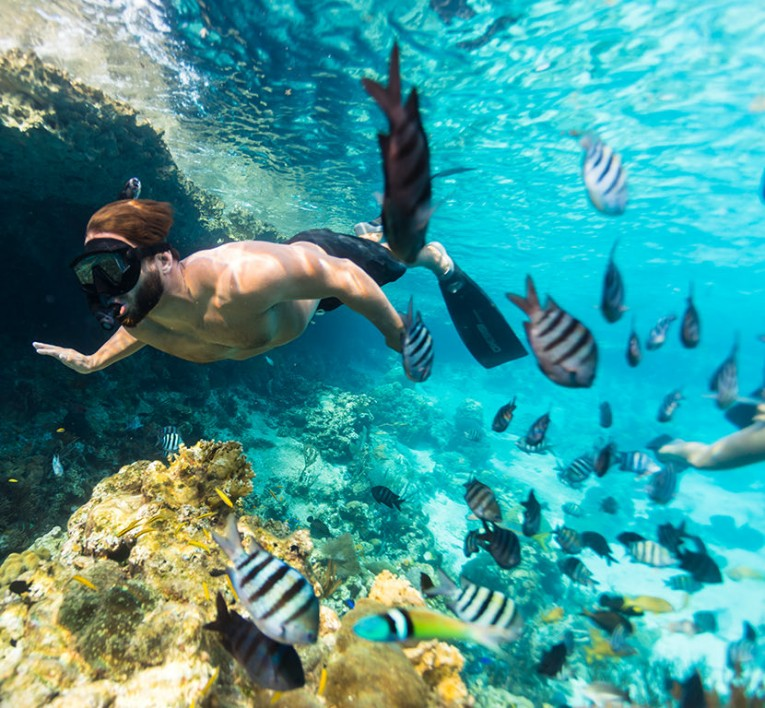 man snorkeling in reef surrounded by fish