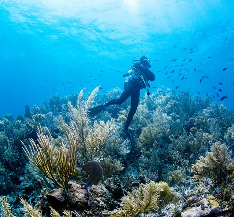 Diver diving an offshore reef near Mayaguana