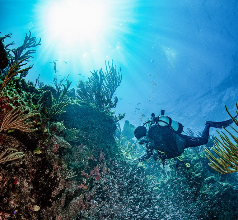 person scuba diving within a coral reef