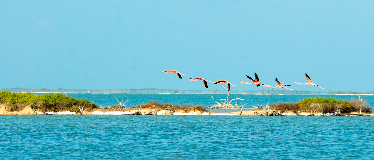 ecotourism bird watching