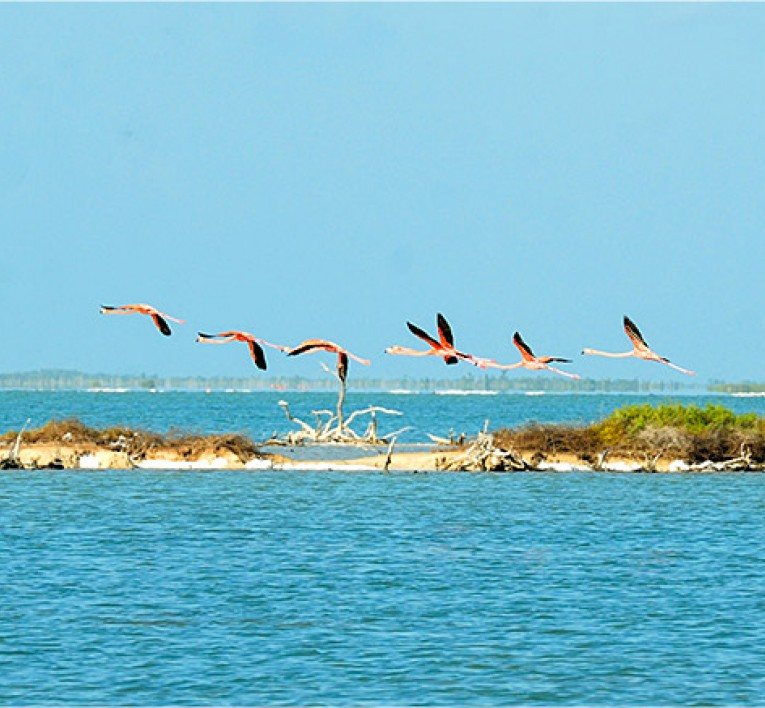 Flock of Flamingos Flying over the Ocean