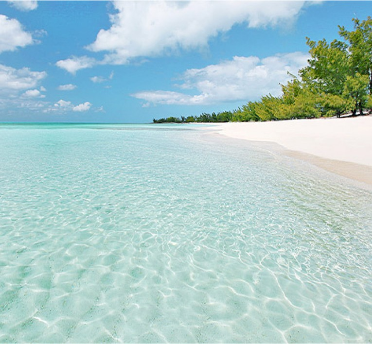 Beach Shoreline with Crystal Clear Water White Soft Powdery Sand and Trees