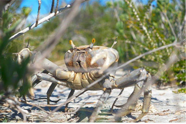 ecotourism crab replenishment